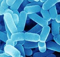 Probiotics Reduce Infection In Children
